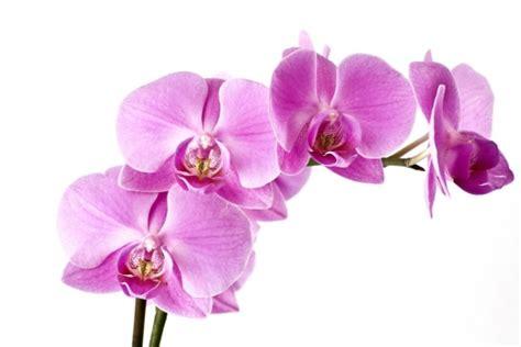 Foto mural Orquideas Rama flores ref 11384876