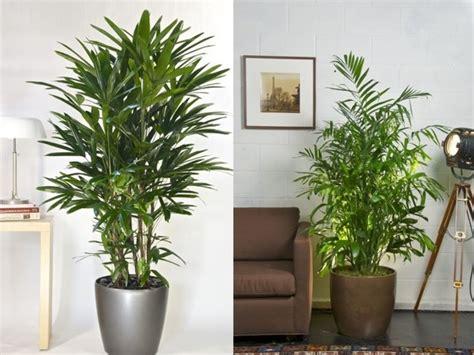 Foto: Plantas Interior #150829   Habitissimo