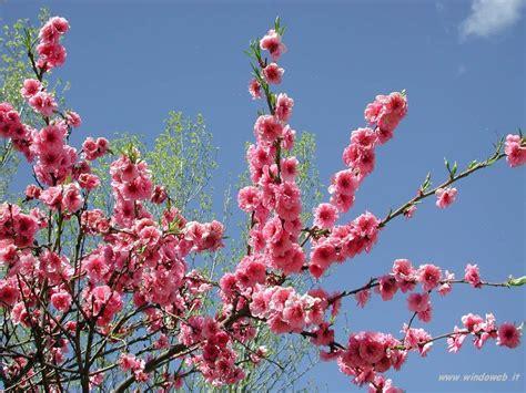 Foto Primavera 15