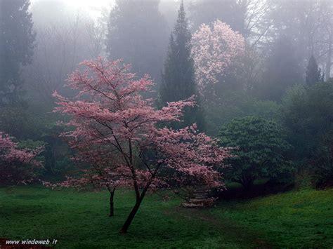 Foto Primavera 29