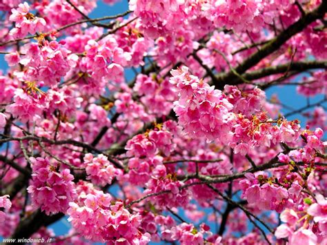 Foto Primavera 54