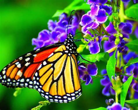 fotografias de mariposas y flores - Fotografias y fotos ...