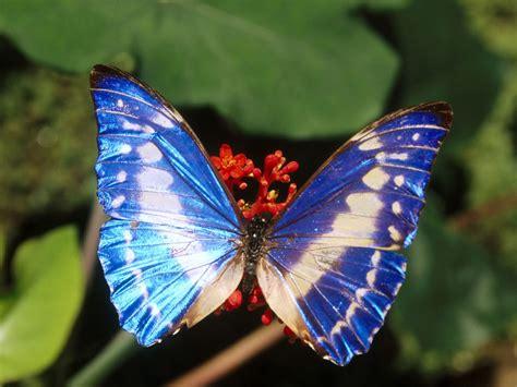 Fotografías Mariposas | Imagenes