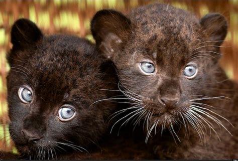 Fotos de animales de la semana: bichinos muy monos a los ...
