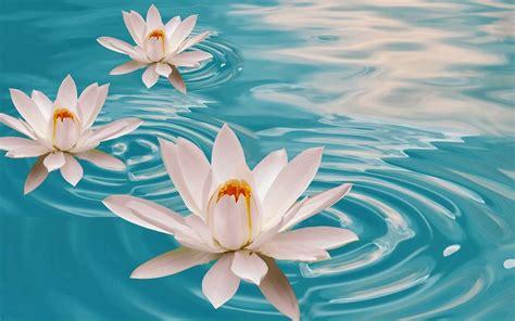 Fotos De Flores Bonitas. Azul Feriado Flores. As Mais ...
