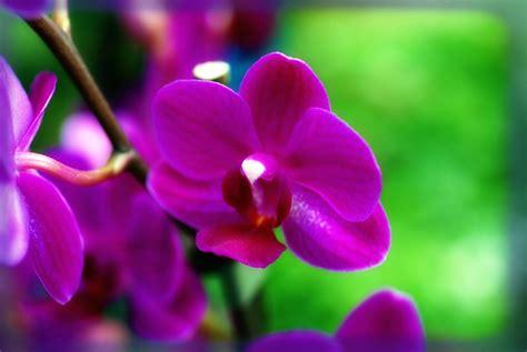 Fotos De Flores Bonitas Gratis Color Violeta | Imagenes de ...