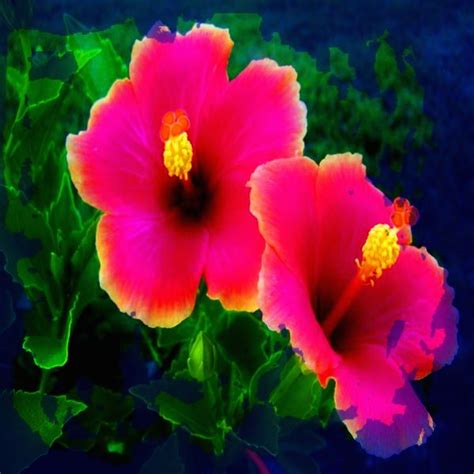 Fotos De Flores Exoticas Gratis   Imagenes de Fondo Para ...