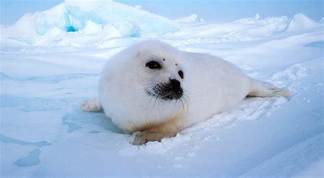 Fotos de focas