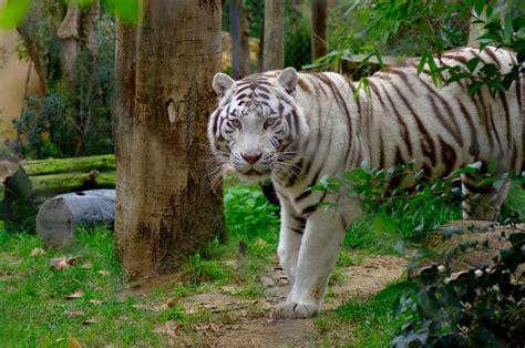 Fotos de Jardín Zoológico   Imágenes