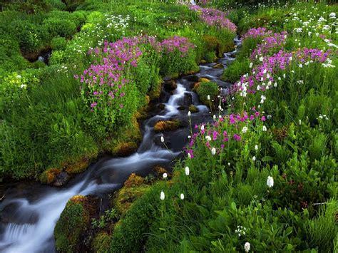 Fotos de la primavera   Hermosas imagenes     Fotos de la ...