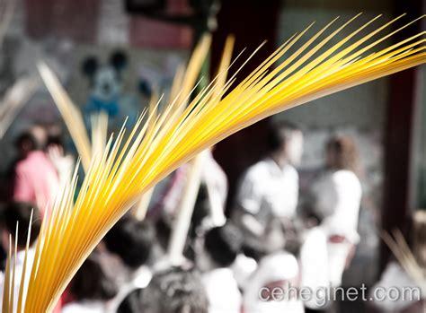 Fotos de la procesión de domingo de ramos