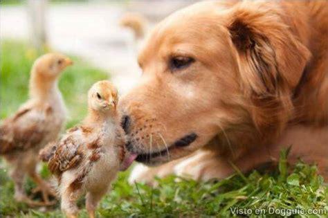 Fotos de lindos y tiernos animalitos | DOGGUIE