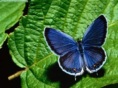 Fotos de mariposas (I)