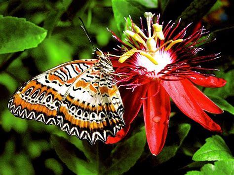 Fotos de mariposas. Imágenes de mariposas