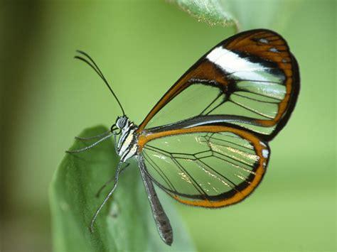 Fotos de mariposas