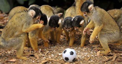 Fotos de monos graciosos - Imagui