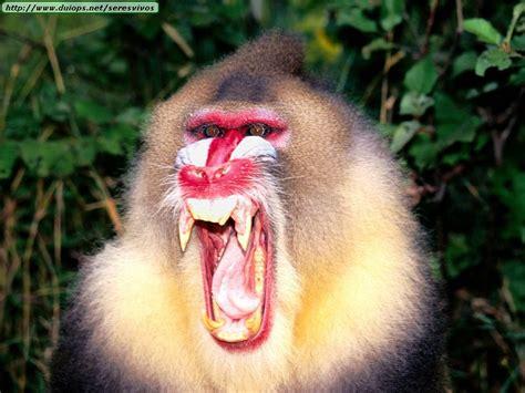 Fotos de monos (I)