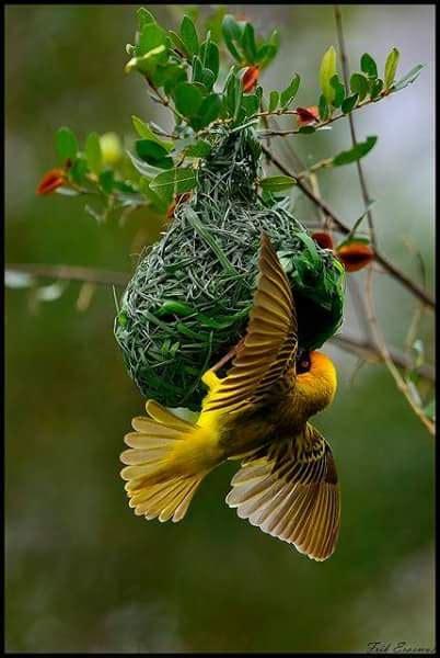 Fotos+De+Pájaros+Bonitos   Imagenes De Aves   Pinterest ...