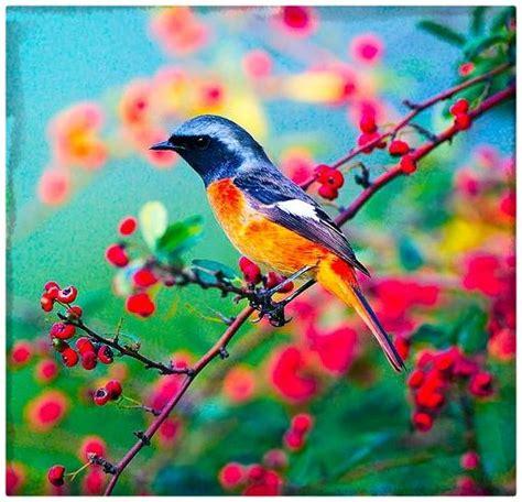 fotos de pájaros de colores y sus nombres Archivos ...