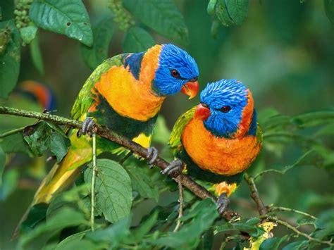 Fotos de pájaros exóticos