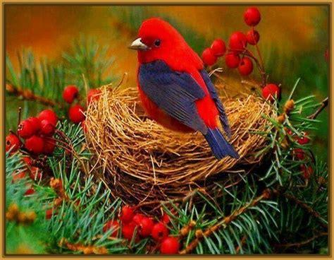 fotos de pájaros tiernos Archivos | Imagenes de Pajaros