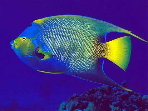 Fotos de peces de colores - Imagui