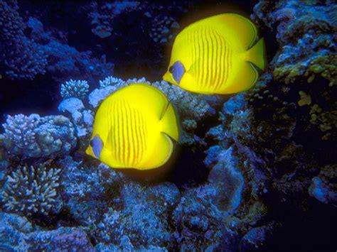 Fotos de peces de colores