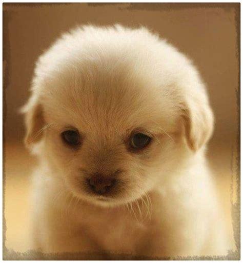 fotos de perritos cachorros bonitos Archivos   Imagenes de ...