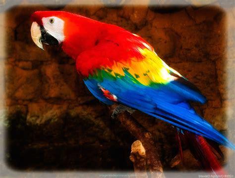 Fotos De Todas Las Aves Del Mundo | Imágenes de Primavera
