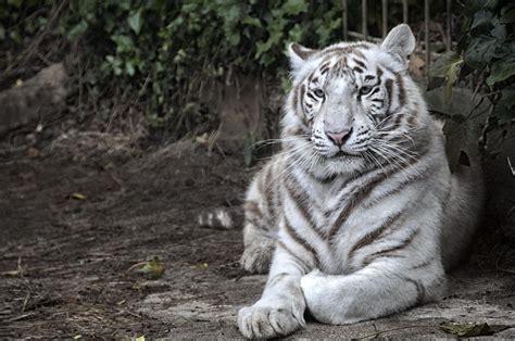 Fotos de Zoológico de Santillana del Mar   Imágenes