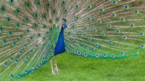 Fotos de Zoológico Zacango: Ver fotos e Imágenes de ...