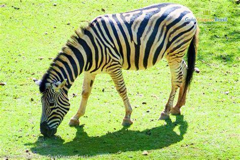 Fotos do Zoológico de São Paulo   Confira as melhores imagens