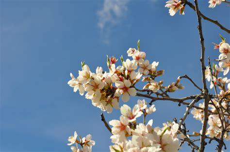 Fotos gratis : árbol, naturaleza, rama, cielo, blanco ...