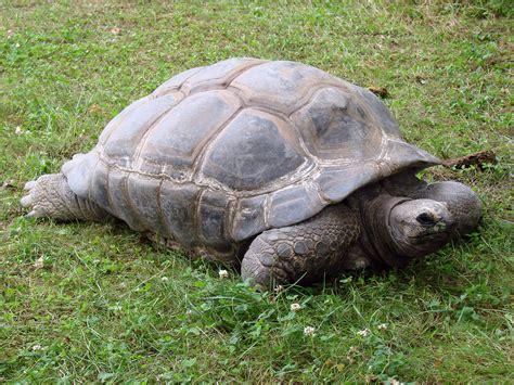 Fotos gratis : fauna silvestre, Zoo, reptil, Animales ...