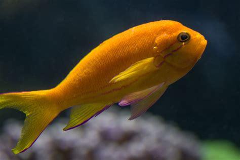 Fotos gratis : naranja, biología, amarillo, fauna, acuario ...