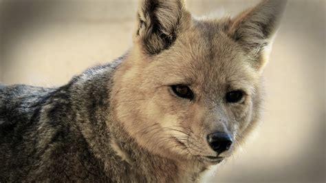 Fotos gratis : naturaleza, animal, fauna silvestre, de ...