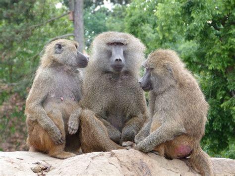 Fotos gratis : naturaleza, fauna silvestre, Zoo, mamífero ...