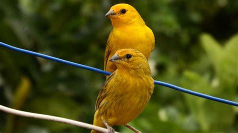 Fotos gratis : naturaleza, pájaro, fauna silvestre, pico ...