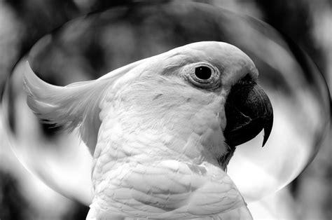 Fotos gratis : pájaro, ala, en blanco y negro, fotografía ...