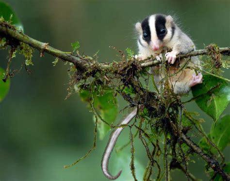 Fotos incríveis: novas espécies encontradas em Papua Nova ...