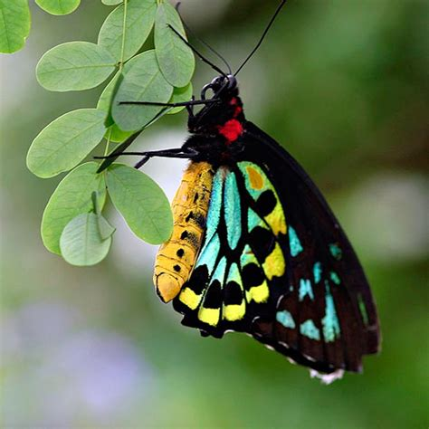 [Fotos] Las 10 mariposas más bellas y coloridas - www ...