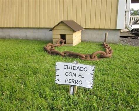 Fotos originales de cuidado con el perro   AnimalesMascotas