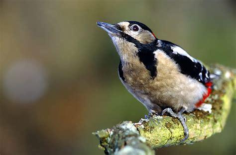Fotos - Pájaros carpinteros Pájaro carpintero Fotos | Foto ...