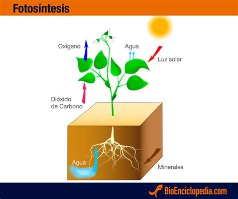 Fotosíntesis   Información y Características