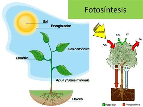 Fotosíntesis.   ppt video online descargar