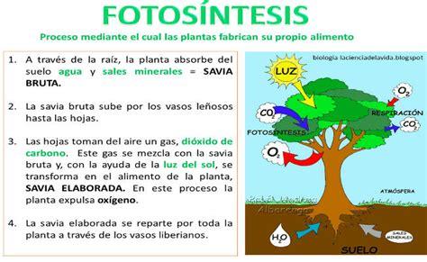 Fotosíntesis » ¿Qué es? » ¿En qué consiste? » ¿Cómo se ...