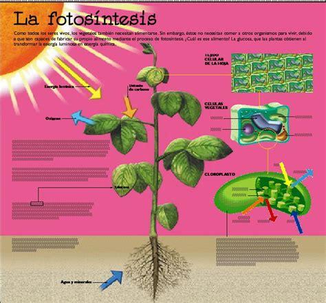 Fotosíntesis VS Respiración: La fotosintesis y sus procesos