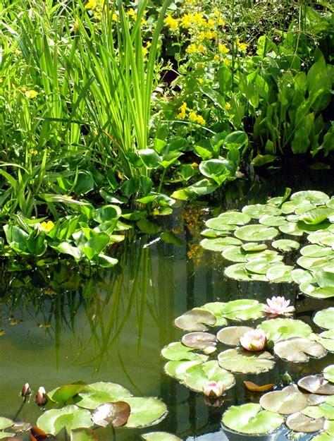 Four Winds Water Garden
