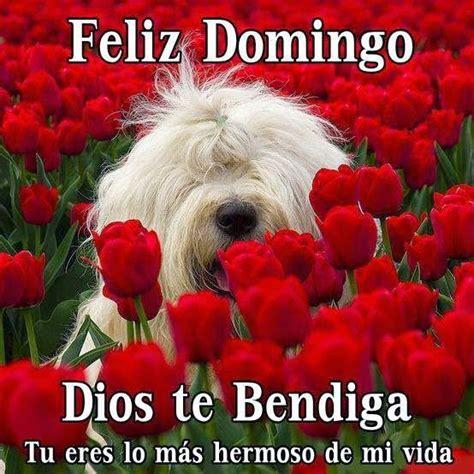 Frases Bonitas Para Facebook: Feliz Domingo Imagenes ...