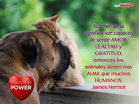 Frases de perros y gatos: Animales con Alma – Mascotas Power